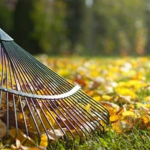 fall clean up for lawns